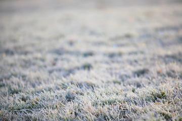 Wiese Reif Winter Gras