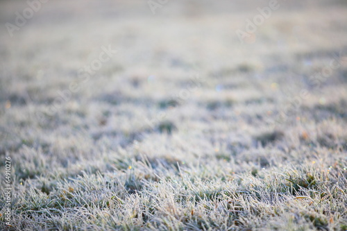 canvas print picture Wiese Reif Winter Gras