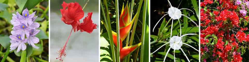Fleurs exotiques et tropicales