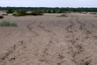 Zdjęcia na płótnie, fototapety, obrazy : pustynia błędowska