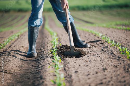 Farmer in field - 64913649