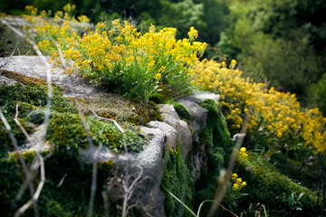 photo of yellow flowers and moss growing on cliff