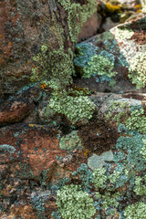 photo of moss and lichen growing on stone at mountain