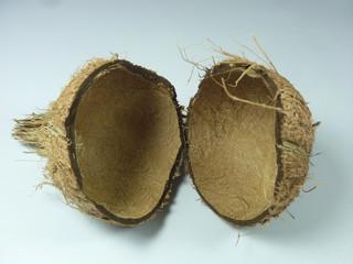 Shell, cover of Cocos nucifera