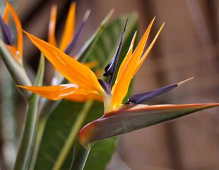Blumen aus Spanien