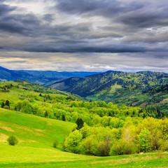 forest on hillside meadow in mountain