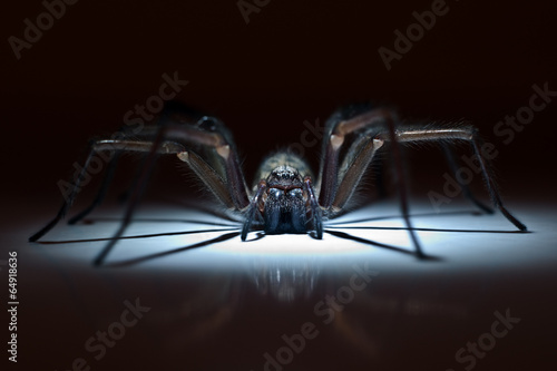 Leinwanddruck Bild huge spider in ambush