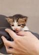 Girl holding kitten
