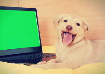puppy and laptop