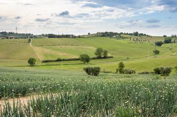 Campagna a Covignano, in Romagna (Italia)