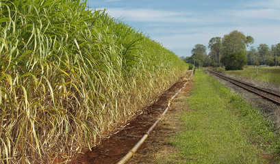 Australian agriculture industry sugar cane crop