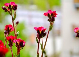 Pink Blüte