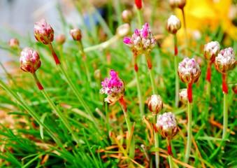 Blüten im Balkonkasten
