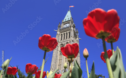 Canadian Parliament surrounded by red tulips