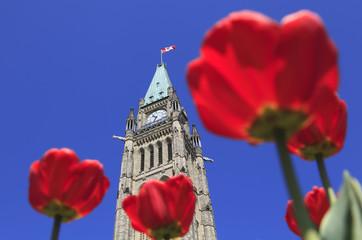 fototapeta Parlament kanadyjski otoczony czerwonymi tulipanami