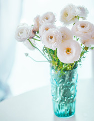 White ranunculus on pastel background