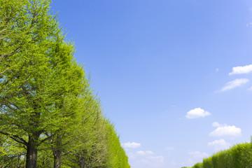 新緑の並木と青空(背景イメージ用)