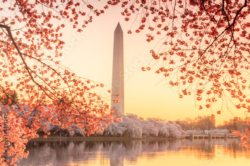 the Jefferson Memorial during the Cherry Blossom Festival - 64932495