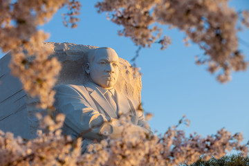 Martin Luther King Monument surrounded by cherry blossoms in Was