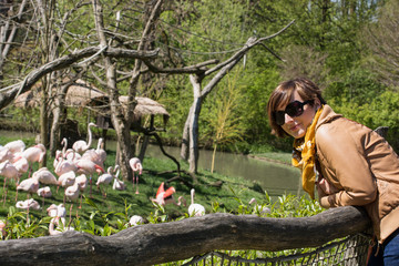 Young woman with flamingos in a zoo
