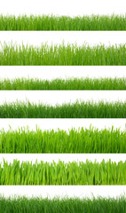 grass on white