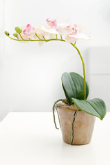 white orchid in flower pot on the table
