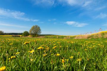 Frühlingslandschaft in Mecklenburg-Vorpommern