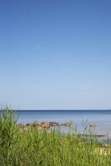 Green grass at Baltic coast.