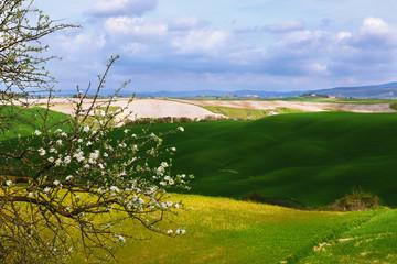 A spring landscape