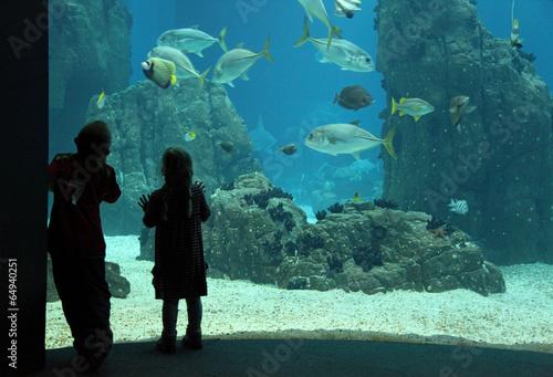 Papiers peints Recifs coralliens aquarium niños lisboa 8802-f14