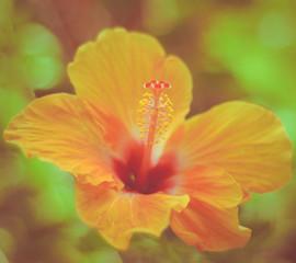 Retro Hawaiian Hibiscus
