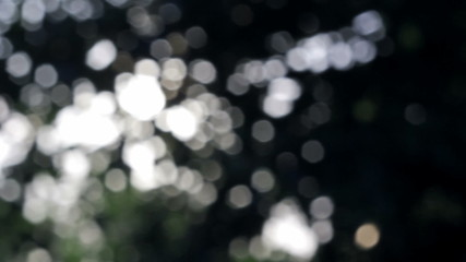 Bokeh blur tree