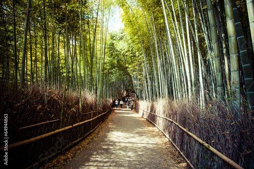 In de dag Bamboo Arashiyama mountain Kyoto Japan with bamboo forest
