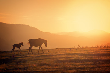 horses silhouette at sunset