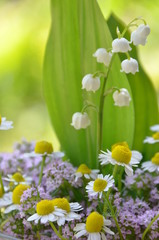 herbs and lily of the valley