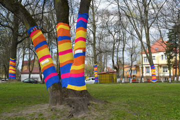 Yarnbombing on trees in Kaliningrad