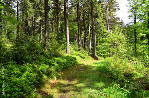 canvas print picture Wald  Bach Pflanzen