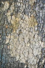 Texture legno corteccia di albero