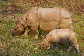 Safari - Nashornbaby mit Mama