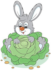Bunny with a cabbage