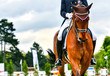 dressage horse and rider - 64949260