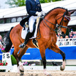 dressage horse and rider - collected trot - 64949267