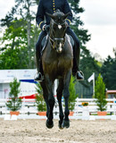 military rider on dressage competition