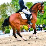 dressage horse and rider - pirouette at walk - 64949265