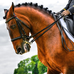 head of dressage horse and rider
