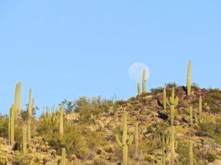 Kaktuswüste USA