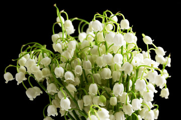 Beautiful lilies of the valley on black background
