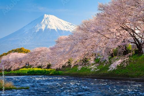 Fuji and Sakura - 64953445