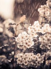 flowers under sunset rain