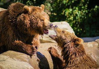 Conversation between two bears